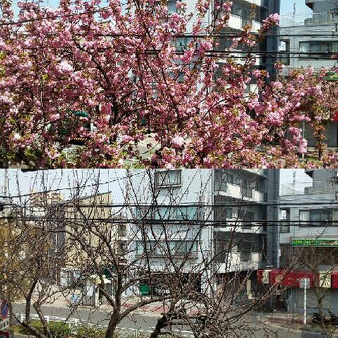 枯木に花を咲かせましょう